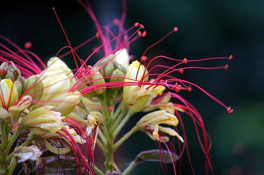 Fab Flower by Debi Demetrion