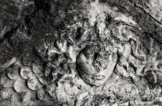 Sophie McAulay - Face carved in stone