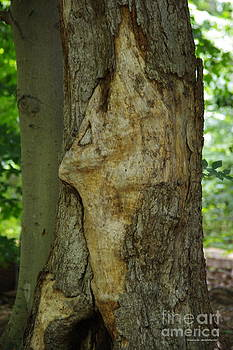 Tannis  Baldwin - Face in the Tree 1