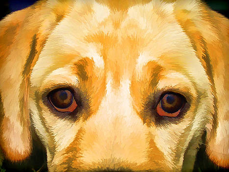 David Letts - Face of Yellow Lab