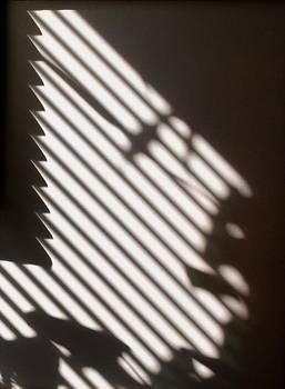 Joy Bradley - Face Shadow