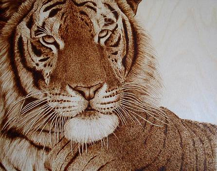 Face to Face Tiger by Cara Jordan