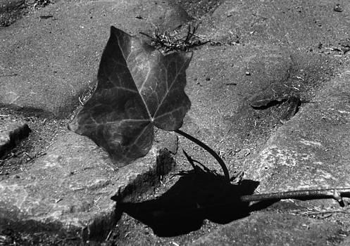 Facing Shadow Self by Jaeda DeWalt