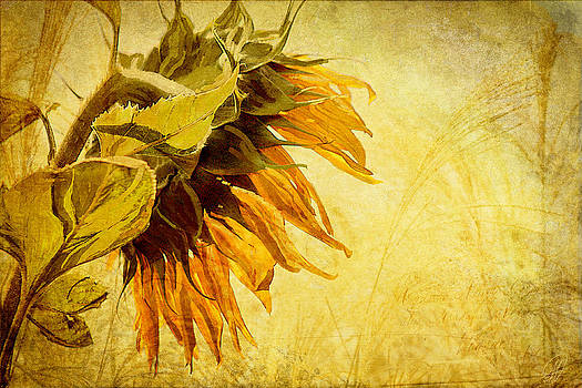 Fade Away by Margaret Hormann Bfa