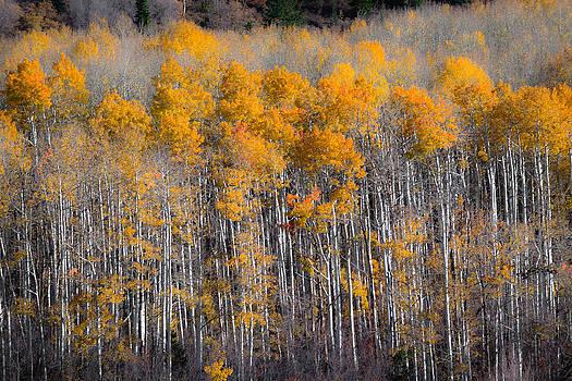 Fading Fall by Chuck Jason