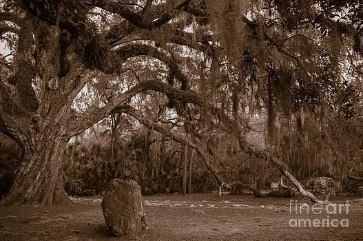 Kathi Shotwell - Fairchild Oak
