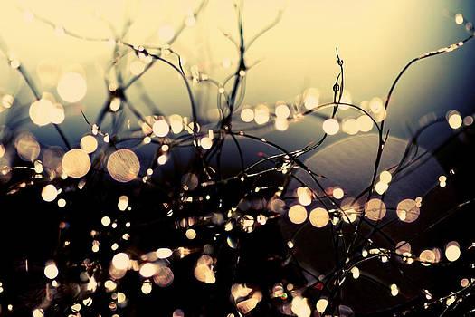 Fairies in my garden by Beata  Czyzowska Young