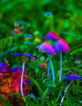 Fairies by Rebecca  Barray