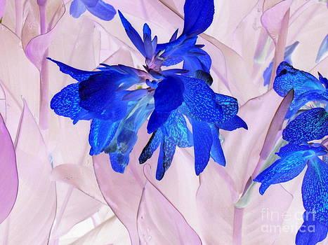 Fairy flowers by Pauli Hyvonen