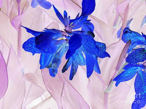 Pauli Hyvonen - Fairy flowers