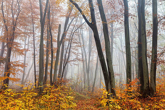 Fairy Forest by Evgeni Dinev
