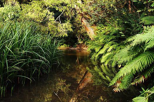 Alex Sukonkin - Fairy forest river