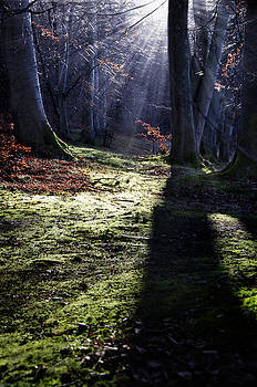 Fairy tale forest landscape by Henrik Petersen