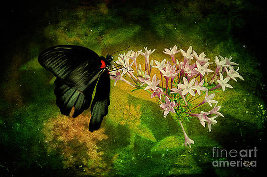 Lois Bryan - Fairyland