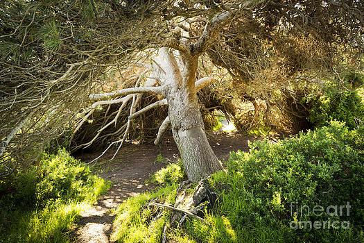 Tim Hester - Fairytale Tree