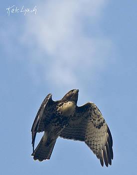 Kate Lynch - Falcon Flight