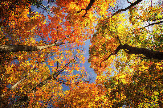 Fall Above by Paul Cimino