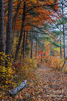 Barbara Bowen - Fall along the Upper Lake Trail