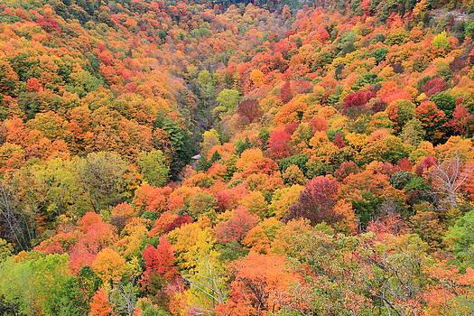 Fall at Dundas Peak  by Philip Neelamegam