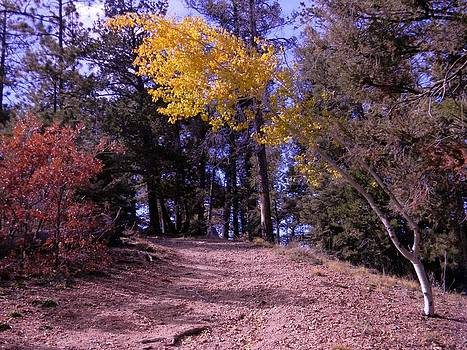 Fall At Hide Park NM by Daria Yesieva-Kartsinski