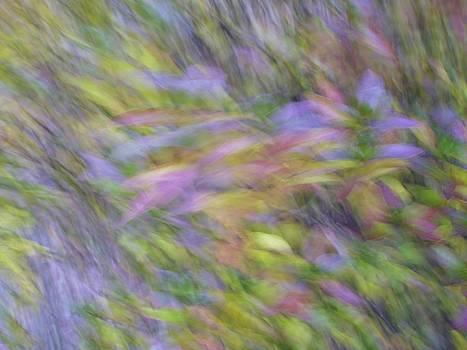 Autumn Azaleas 1 by Bernhart Hochleitner