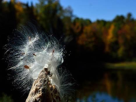 Fall beauty by Glenn Sanborn