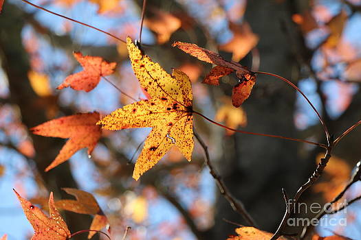 Fall Beauty by Light Rapture