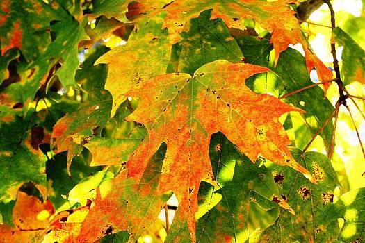 Fall Begins by Beth Andersen
