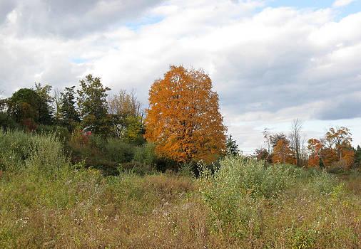 Fall Begins by Rosie Brown
