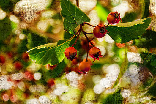 Fall Berries in a collage with bokeh by Miki  Finn