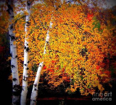 Dazzling Birch by Jaunine Roberts