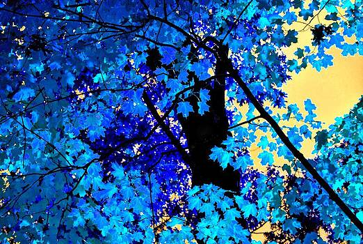 Fall Blues by Sheryl Thomas