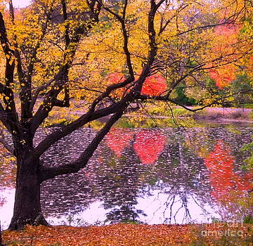 Fall Brilliance by Marcel  J Goetz  Sr