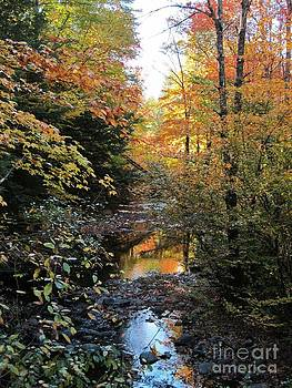Fall Brook by Linda Marcille