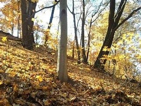 Fall by Carmel Joseph