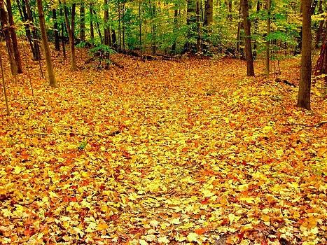 Fall Carpet by Scott Schlaff