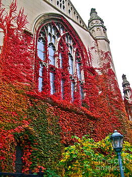 Fall Cathedral by Linda Zolten Wood