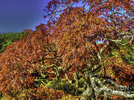 Dale Powell - Fall Color at Biltmore