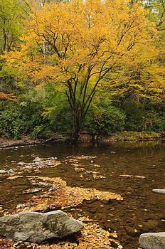 Fall Color by Ben  Keys Jr