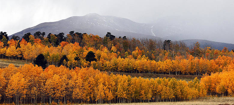Fall color Colorado by Thanh Nguyen