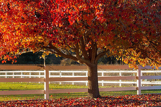 Roger Mullenhour - Fall Color in Santa Ynez