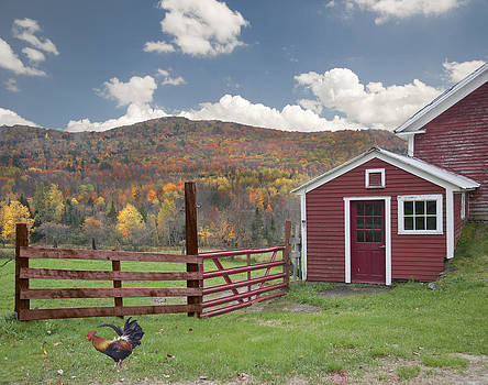 Fall Color In Sugar Hill NH by Wayne Letsch