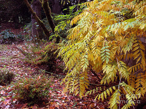 Ellen Miffitt - Fall Color in the Yashiro Japanese Garden