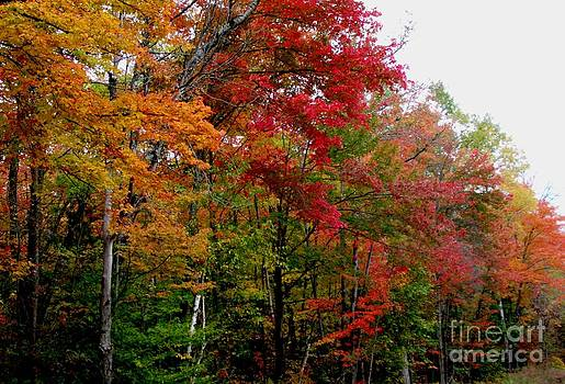 Gail Matthews - Fall Color Palette