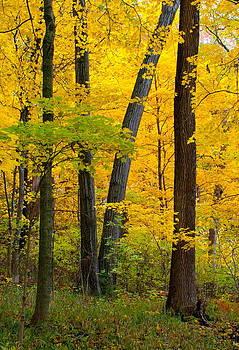 Fall Color by Virginia Folkman