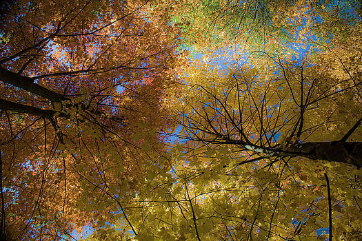 Fall colors  by Angela  Beauchamp
