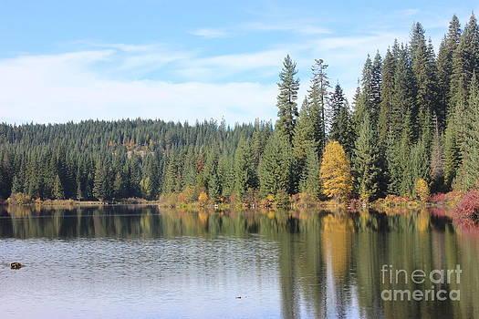 Fall colors at Elk River I by Linda Meyer
