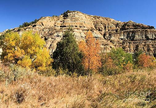 Adam Jewell - Fall Colors At Roosevelt