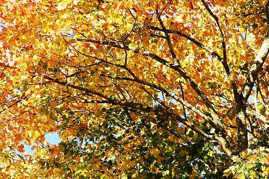 Fall Colors by Beth Andersen