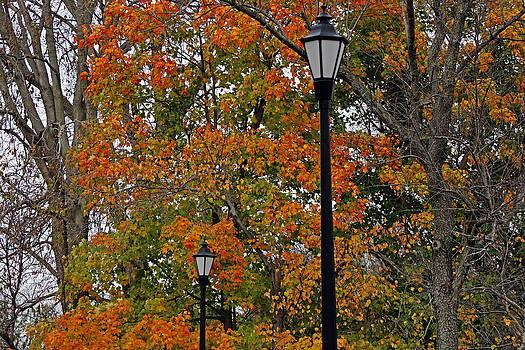 Fall Colors by Carolyn Ricks